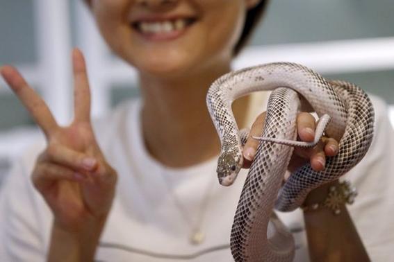donde esta el cafe con serpientes 1