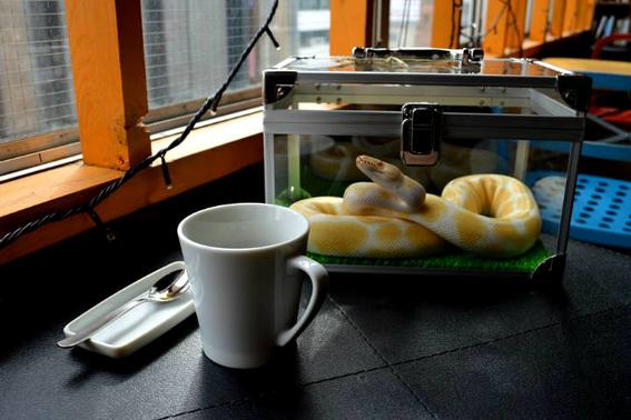 donde esta el cafe con serpientes 4