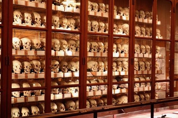 mutter museum philadelphia 3