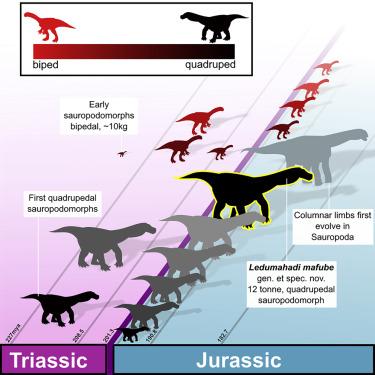 descubren dinosaurio que pesaba mas de once mil kilos 3