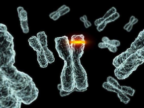 que es la fusion celular 2
