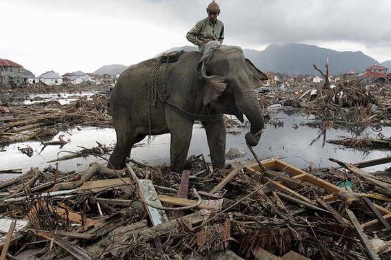los tsunamis mas mortiferos de la historia 3
