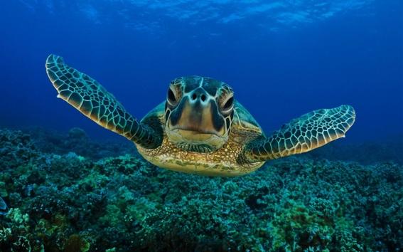 nacen 300 tortugas en peligro de extincion 3