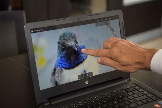ecuador descubre una nueva especie de colibri estrella de garganta azul 2
