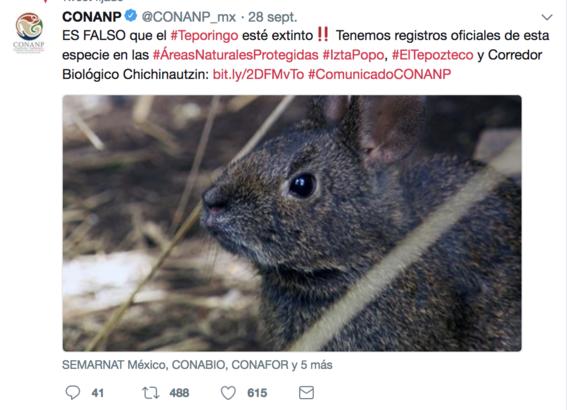 conanp niega extincion del conejo teporingo 1
