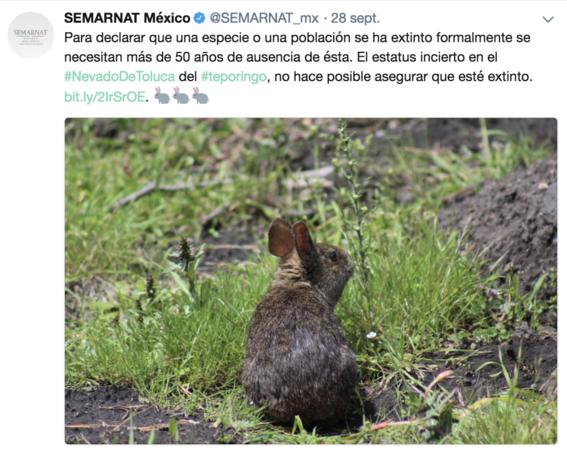 conanp niega extincion del conejo teporingo 3