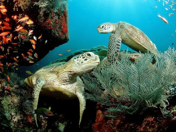se pierden mas de 2 mil huevos de tortuga golfina en mexico 2