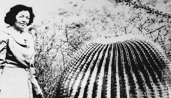 google dedica doogle a la botanica mexicana helia bravo hollis 2