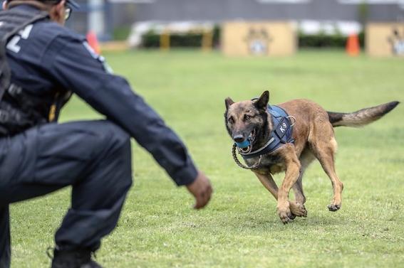 reconocen a khublay perro rescatista que encontro  70 personas 1