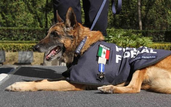 reconocen a khublay perro rescatista que encontro  70 personas 2