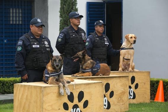 reconocen a khublay perro rescatista que encontro  70 personas 3