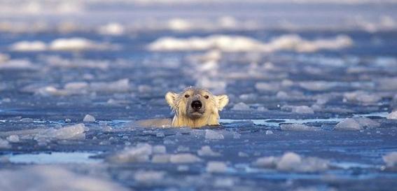 hielo marino del artico esta en su punto mas bajo 1