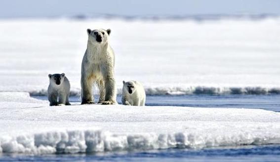 hielo marino del artico esta en su punto mas bajo 4
