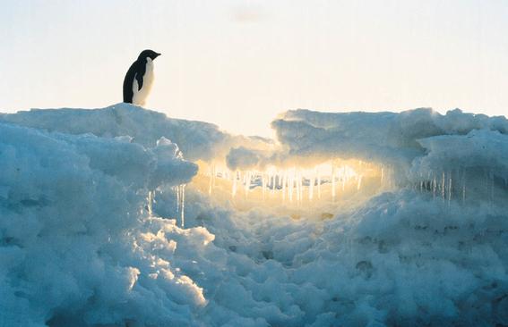 hielo marino del artico esta en su punto mas bajo 5