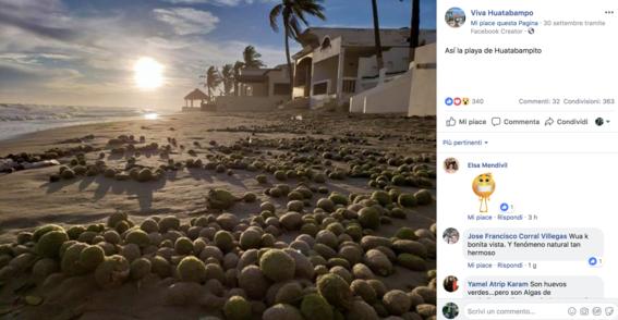 aparecen miles de bolas verdes en playa de sonora 1