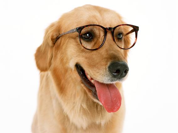 estudio dice que perros no son tan inteligentes como otras especies 1