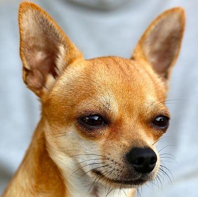 estudio dice que perros no son tan inteligentes como otras especies 2