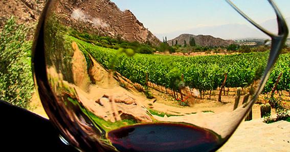 vino en baja california 2