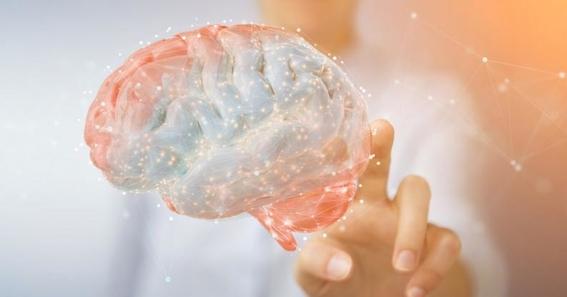 red de cerebros conectados para compartir pensamientos brainnet 2