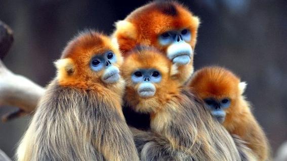 los animales mas raros del mundo 2