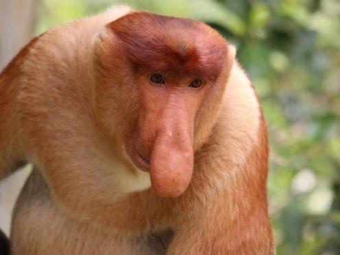 los animales mas raros del mundo 9