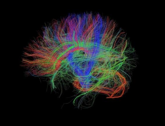 cambios beneficios cerebro hablar dos idiomas 2