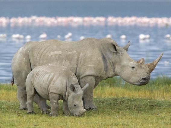 animales en peligro de extincion 4