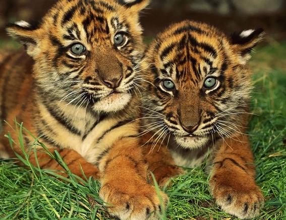 animales en peligro de extincion 5