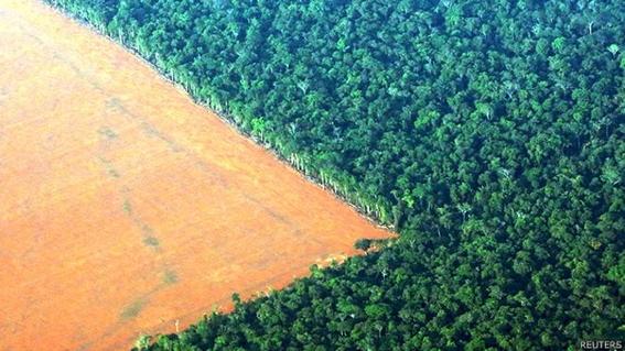 deforestacion del diecisiete por ciento del bosque amazonico 1