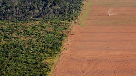 deforestacion del diecisiete por ciento del bosque amazonico 2