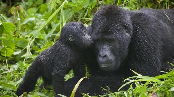 animales en peligro de extincion 6