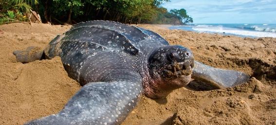 animales en peligro de extincion 7