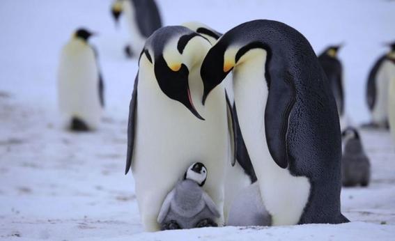 animales en peligro de extincion 8