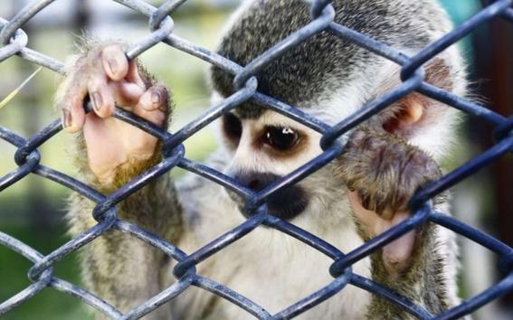 animales en peligro de extincion 1