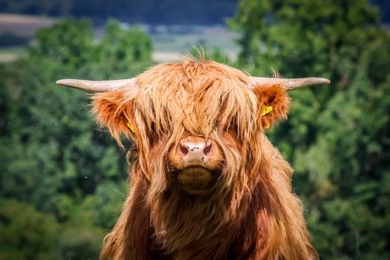 agolin para reducir los eructos de vacas para combatir el cambio climatico 3