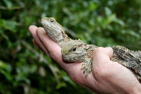 cambio climatico afecta reproduccion de reptiles 3