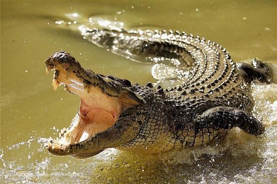 cambio climatico afecta reproduccion de reptiles 1
