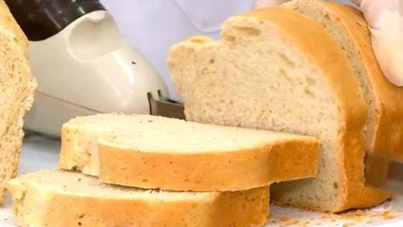 crean pan hecho de cucaracha con alto nivel de proteina 1