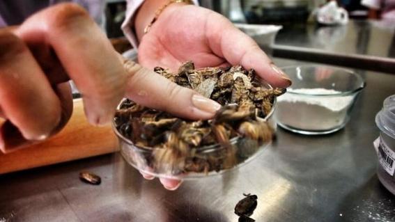 crean pan hecho de cucaracha con alto nivel de proteina 2
