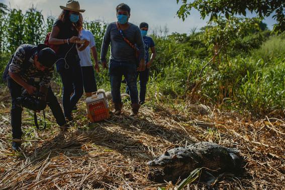 derrame de pemex mata a decenas de especies 2