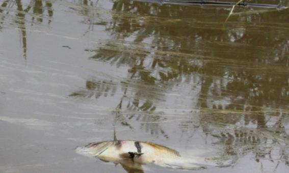 derrame de pemex mata a decenas de especies 5