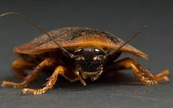 pan de cucarachas razones para comer 2