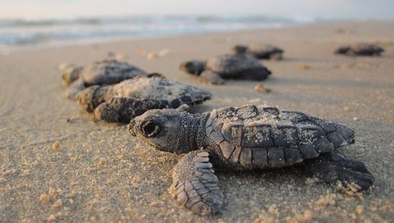 impartiran curso a pescadores para evitar muerte de tortugas 3