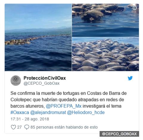impartiran curso a pescadores para evitar muerte de tortugas 1