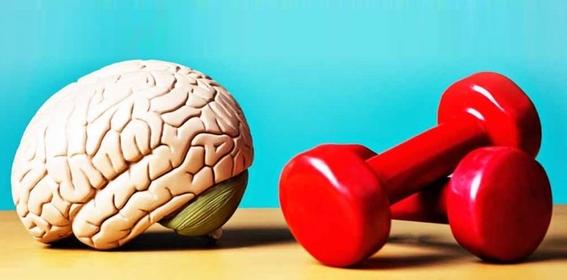 retirar las celulas mas viejas puede mantener joven el cerebro 2