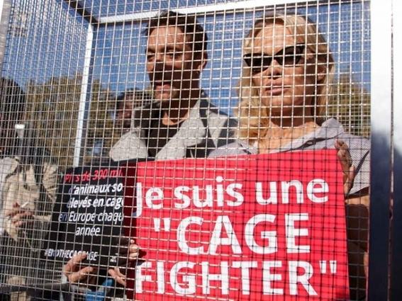 pamela anderson se encierra en una jaula para denunciar violencia animal 2