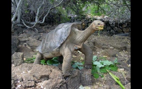 roban tortugas bebes en peligro de extincion de centro de crianza galapagos 2