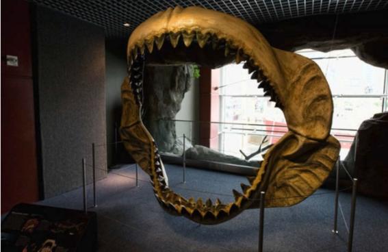 cientificos obtienen una beca para averiguar por que se extinguio megalodon 2