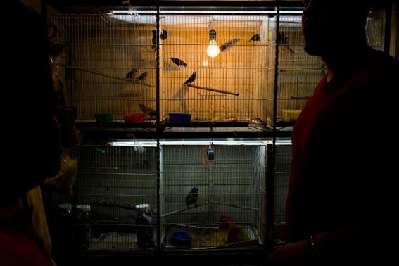 amarres con colibries 1