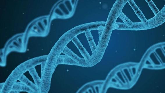 cientificos encuentran gen causante de disfuncion erectil 1